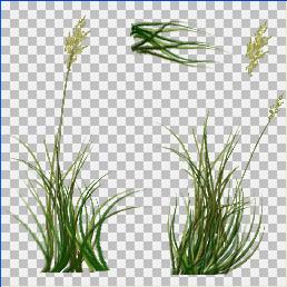 tall grass texture. Creating Grass In Maya Tall Texture